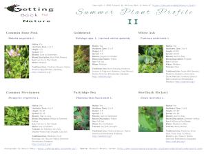 Summer Plant Profile II
